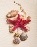 一个红色海星和各种各样的贝壳在沙子 免版税库存照片