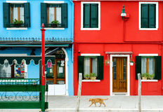 一个红色猫和五颜六色的大厦在Burano,威尼斯,意大利 免版税库存照片