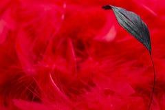 一个红色背景 免版税库存图片
