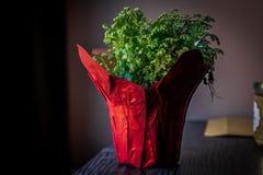 一个红色花瓶的植物 免版税库存照片