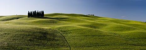 一个组意大利柏树 免版税库存照片