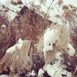 一个经典多雪的农厂场面 库存照片