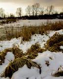 一个结冰的池塘的岸有积雪的沿海草的 免版税图库摄影