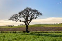 一个结构树在冬天 免版税库存图片