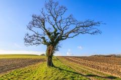 一个结构树在冬天 图库摄影