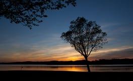 一个结构树的剪影在日落的在Garaio 免版税库存图片