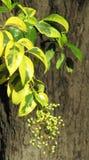 一个结构树的秋天分行与五颜六色的叶子的 免版税库存照片