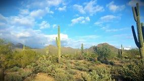 一个绿色仙人掌在斯科茨代尔,一串走的足迹的亚利桑那沙漠  免版税库存图片