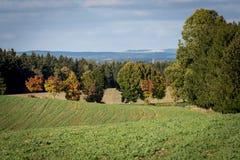 一个绿色卷曲领域和胡同树背景与五颜六色的叶子的 免版税图库摄影