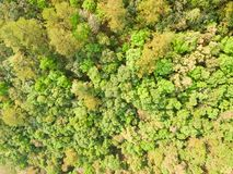 一个绿色密林的空中射击 免版税图库摄影
