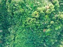 一个绿色密林的鸟瞰图 库存照片