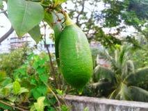 一个绿色柠檬 免版税库存图片