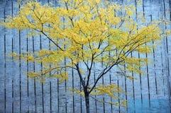 一个绿色结构树和混凝土墙 免版税库存图片