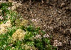 一个绿色花组合在庭院里 免版税库存图片