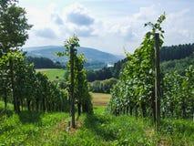 一个绿色葡萄园在Villnachern乡下  免版税库存图片