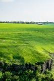 一个绿色领域的农场 库存图片