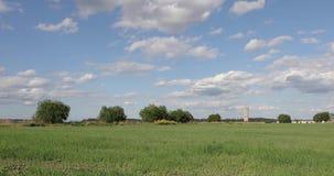 一个绿色领域的风景与树的反对天空蔚蓝和白色云彩 股票录像