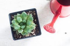 一个罐与红色喷壶的仙人掌在木桌上 库存照片