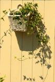 一个罐在墙壁上的花 库存图片