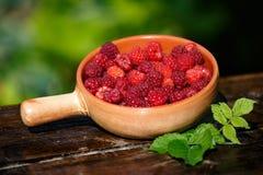 一个罐新近地被采摘的莓在庭院里 库存图片