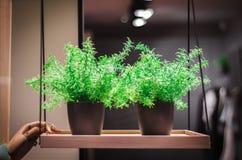 一个罐的绿色植物在架子 免版税库存图片