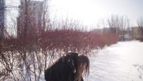 一个美丽和逗人喜爱的女孩与黑暗的长的头发佩带的玻璃走的冬天停放 她微笑并且是愉快的演奏雪 股票录像