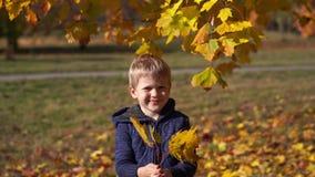 一个美丽的小男孩的画象在秋天公园 影视素材