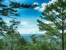 一个美丽的杉木森林 库存图片