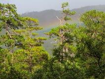 一个美丽的杉木森林 库存照片