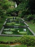 一个美丽的池塘在有waterlily的庭院里 免版税库存图片