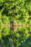 一个美丽的湖在有绿色夏天树的森林里 图库摄影