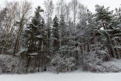 一个美丽的积雪的冬天森林Ice湖和森林小河 免版税库存图片