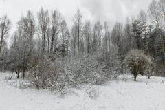 一个美丽的积雪的冬天森林Ice湖和森林小河 库存图片