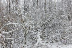 一个美丽的积雪的冬天森林Ice湖和森林小河 图库摄影