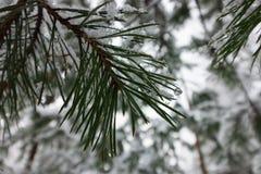 一个美丽的积雪的冬天森林Ice湖和森林小河 免版税图库摄影