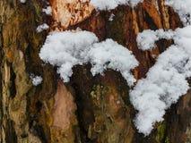 一个美丽的积雪的冬天森林Ice湖和森林小河 库存照片