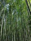 一个美丽的竹树丛在京都,日本 图库摄影
