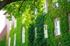 一个美丽的老大厦的门面长满与豪华的绿色卷曲植物 库存图片