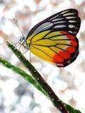 一个美丽的蝴蝶和仙人掌 免版税库存照片