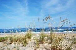 一个美丽的风景沙丘植物群的看法在阿尔加威 库存照片