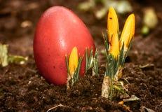 一个美丽,色的红色复活节彩蛋在后院 传统春天食物和节日 库存照片