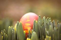 一个美丽,色的红色复活节彩蛋在后院 传统春天食物和节日 免版税库存图片