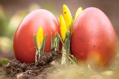 一个美丽,色的红色复活节彩蛋在后院 传统春天食物和节日 免版税图库摄影