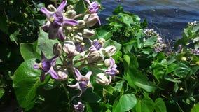 一个美丽Flowers附近的湖 库存照片