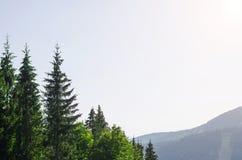 一个美好的山风景:云杉上面和蓝天 免版税库存图片