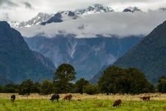 一个美好的新西兰风景 库存图片