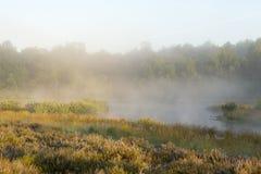 一个美好的有雾的早晨 免版税库存图片
