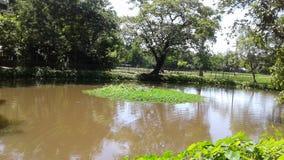 一个美好的池塘场面 库存图片