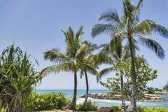 一个美好的热带夏威夷海滩场面 图库摄影