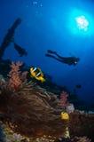 一个美好的礁石场面 库存图片